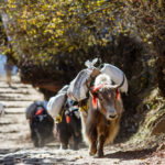 Choses à savoir avant de voyager au Népal
