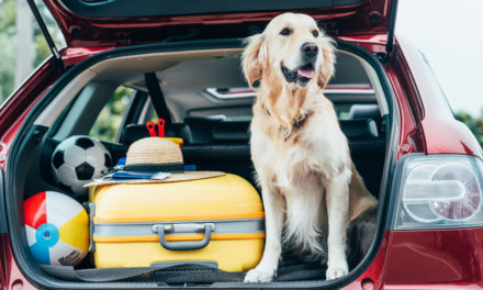 Les chiens et le mal des transports